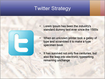 Brown Recluse PowerPoint Template - Slide 9