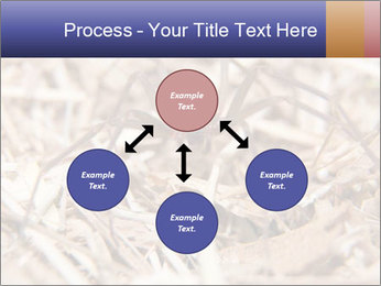 Brown Recluse PowerPoint Template - Slide 91