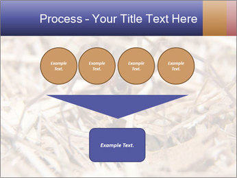 Brown Recluse PowerPoint Template - Slide 93