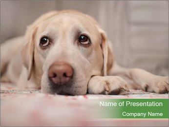 The dog PowerPoint Template - Slide 1