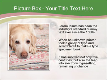 The dog PowerPoint Template - Slide 13