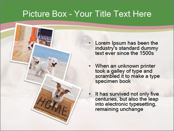 The dog PowerPoint Template - Slide 17