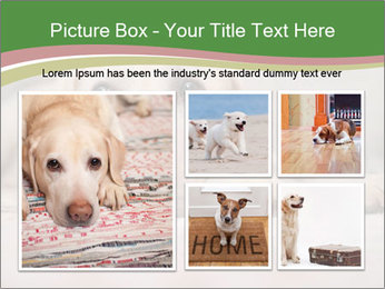 The dog PowerPoint Template - Slide 19