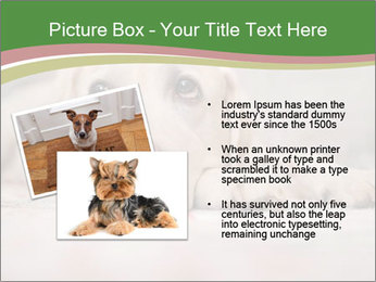 The dog PowerPoint Template - Slide 20