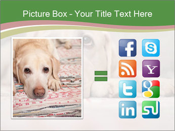 The dog PowerPoint Template - Slide 21