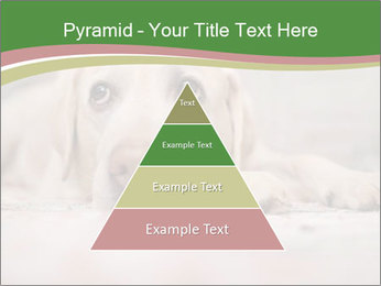 The dog PowerPoint Template - Slide 30