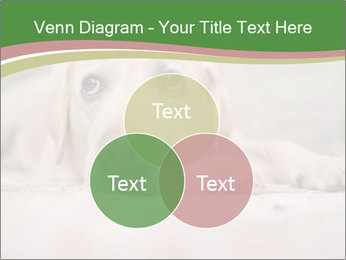 The dog PowerPoint Template - Slide 33