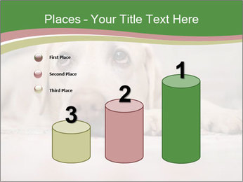 The dog PowerPoint Template - Slide 65