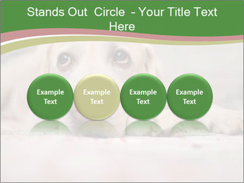 The dog PowerPoint Template - Slide 76