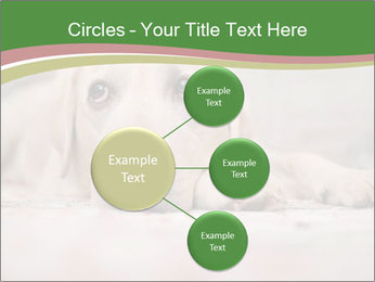 The dog PowerPoint Template - Slide 79
