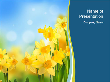 Yellow narcissuses PowerPoint Templates
