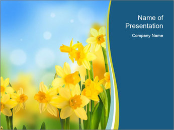 Yellow narcissuses PowerPoint Templates - Slide 1