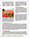 0000088110 Word Template - Page 4