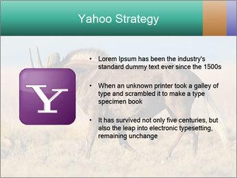 Male black wildebeest PowerPoint Template - Slide 11