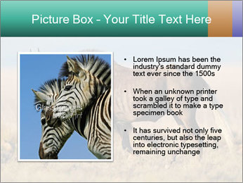 Male black wildebeest PowerPoint Template - Slide 13