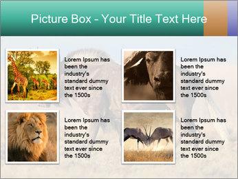 Male black wildebeest PowerPoint Template - Slide 14