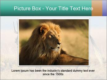 Male black wildebeest PowerPoint Template - Slide 15