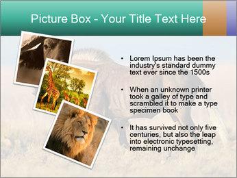 Male black wildebeest PowerPoint Template - Slide 17