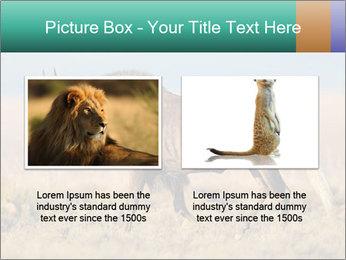 Male black wildebeest PowerPoint Template - Slide 18