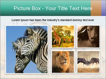 Male black wildebeest PowerPoint Template - Slide 19