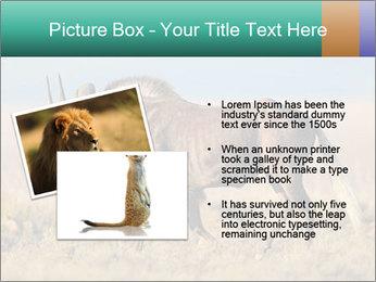 Male black wildebeest PowerPoint Template - Slide 20