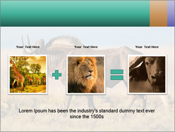 Male black wildebeest PowerPoint Template - Slide 22