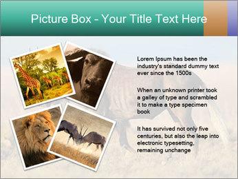 Male black wildebeest PowerPoint Template - Slide 23