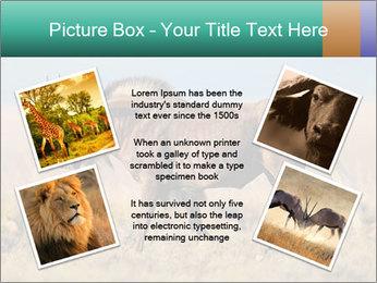 Male black wildebeest PowerPoint Template - Slide 24