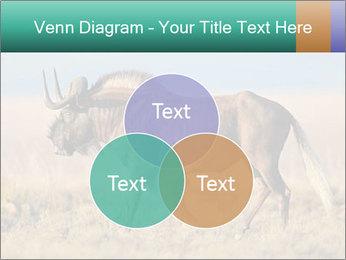 Male black wildebeest PowerPoint Template - Slide 33