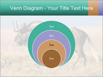 Male black wildebeest PowerPoint Template - Slide 34