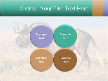 Male black wildebeest PowerPoint Template - Slide 38