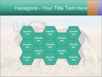 Male black wildebeest PowerPoint Template - Slide 44