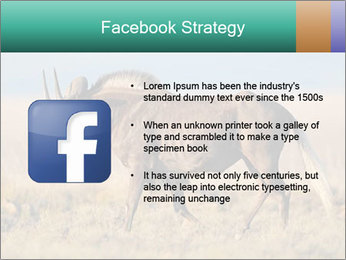 Male black wildebeest PowerPoint Template - Slide 6