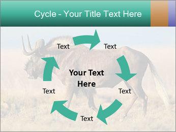 Male black wildebeest PowerPoint Template - Slide 62