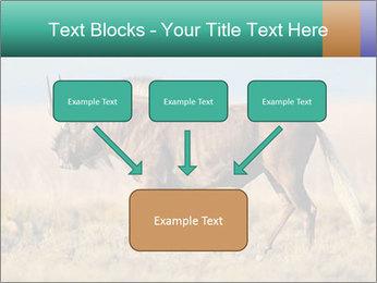 Male black wildebeest PowerPoint Template - Slide 70