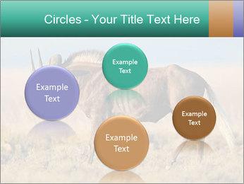 Male black wildebeest PowerPoint Template - Slide 77