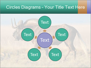 Male black wildebeest PowerPoint Template - Slide 78
