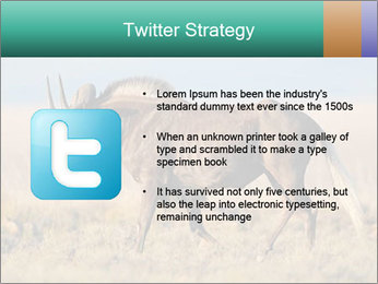 Male black wildebeest PowerPoint Template - Slide 9