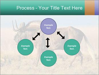Male black wildebeest PowerPoint Template - Slide 91
