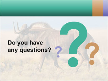 Male black wildebeest PowerPoint Template - Slide 96