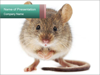House mouse PowerPoint Templates - Slide 1