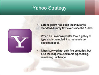 House mouse PowerPoint Template - Slide 11