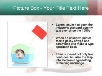 House mouse PowerPoint Template - Slide 13