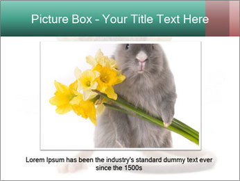 House mouse PowerPoint Templates - Slide 15