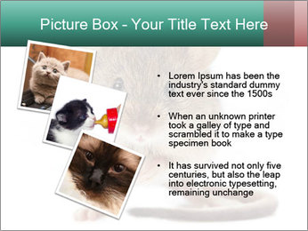 House mouse PowerPoint Template - Slide 17