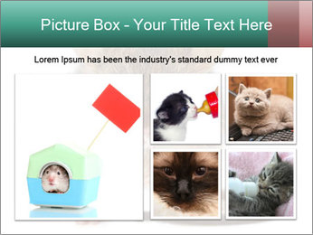 House mouse PowerPoint Template - Slide 19
