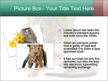 House mouse PowerPoint Templates - Slide 20