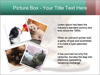 House mouse PowerPoint Template - Slide 23