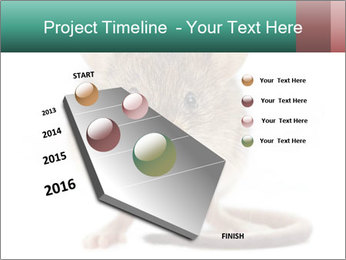 House mouse PowerPoint Template - Slide 26