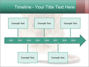 House mouse PowerPoint Templates - Slide 28